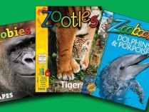 Zoobooks Coupons – 28% OFF Kids' Animal Magazines – Newspapers & Magazines Deals